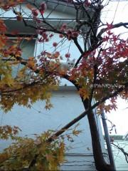 木登りネコさん
