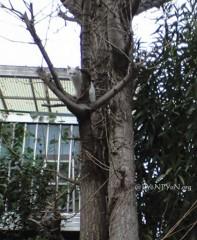 また木登りネコさん