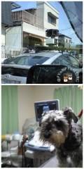 googleカーを横目にパセリ病院へ