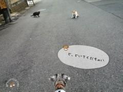 ネコと対峙
