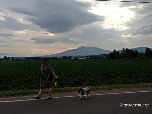 パセ☆&ポプと散歩
