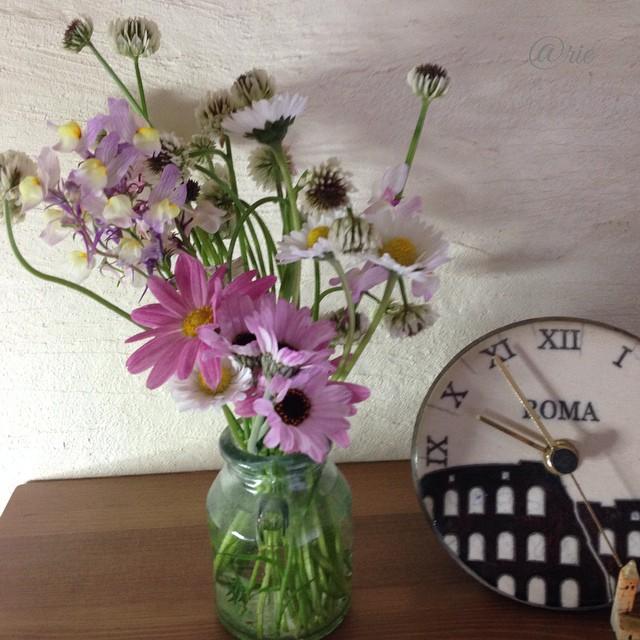 庭の 花とシロツメクサ