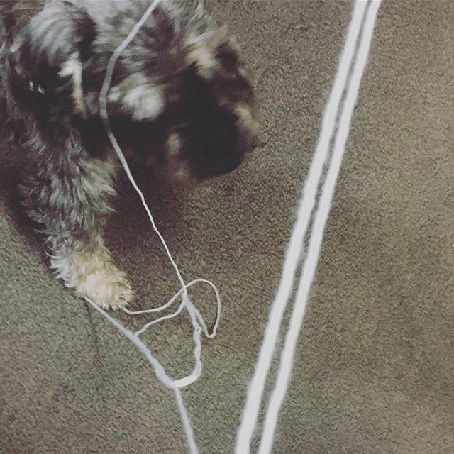 ポプラさん、夕方おなかすいてストーカー中、糸をまくのを手伝ってくれてました^_^ 。もしかしてもうやめてって言ってた?