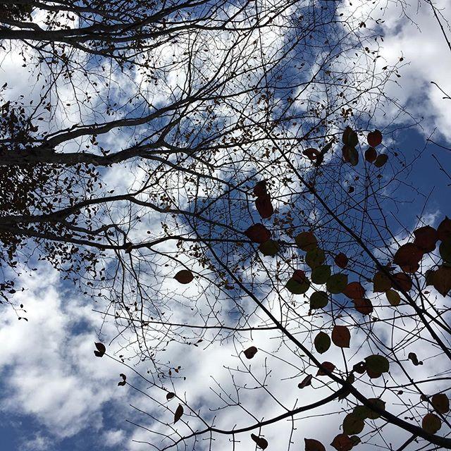 キツツキと森の出展、楽しくてあっという間に終わってしまいました。今日もありがとうごいました♪キツツキと森のイベントは明日も開催しています。明日も行きたいくらい素敵な出店の方がいっぱいなのですが、明日は柏の葉T-SITEに出展です。明日はT-SITEでお会いできるのを楽しみにしています!