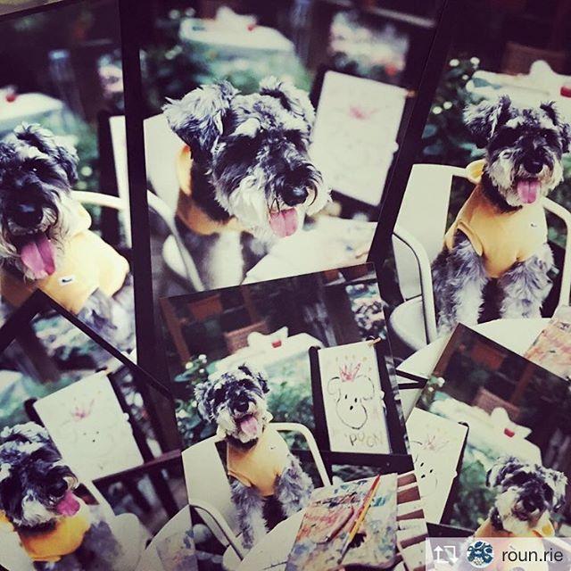 Repost from @roun.rie 8月に犬ごはんのお教室を開催予定なのですが、ふとさっき思い出したことが…すっかり忘れていましたが、遠い昔に愛玩動物飼養管理士の資格を取っていました。教本などどうしたかしら?と探してみたら、大事にし過ぎてしまい込み、すっかり存在を忘れていた写真が︎ 愛犬チャンプの表紙撮影でパセリを撮って頂いたものです。表紙が応募制になる前の時代(笑)奥の画像は突然その場で描いてと渡されて描いた絵。パセリのおかげで私の絵まで表紙を飾ることになりました。パセリ、ありがとう(*^o^*) 現在開催中の透明水彩画と額装の展示「色摘み…夢のたねまき」と8月に開催予定の「ゆるやかにこにこ犬ごはん」のふたつに共通するこの写真。今、出て来てくれたのも縁、運命なのかしらと思ったり(^^) 展示は7月5日まで。犬ごはん教室は現在参加者募集中です。